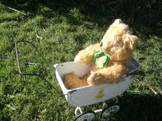 Teddy in the pram two