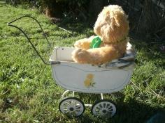 Teddy in the pram one